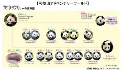 和歌山アドベンチャーワールド:パンダファミリー家系図の画像