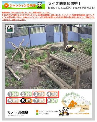 「Ueno Panda Live.jpのライブ映像」のページ画像