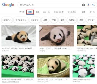 「赤ちゃんパンダ」に関するたくさんの写真・画像